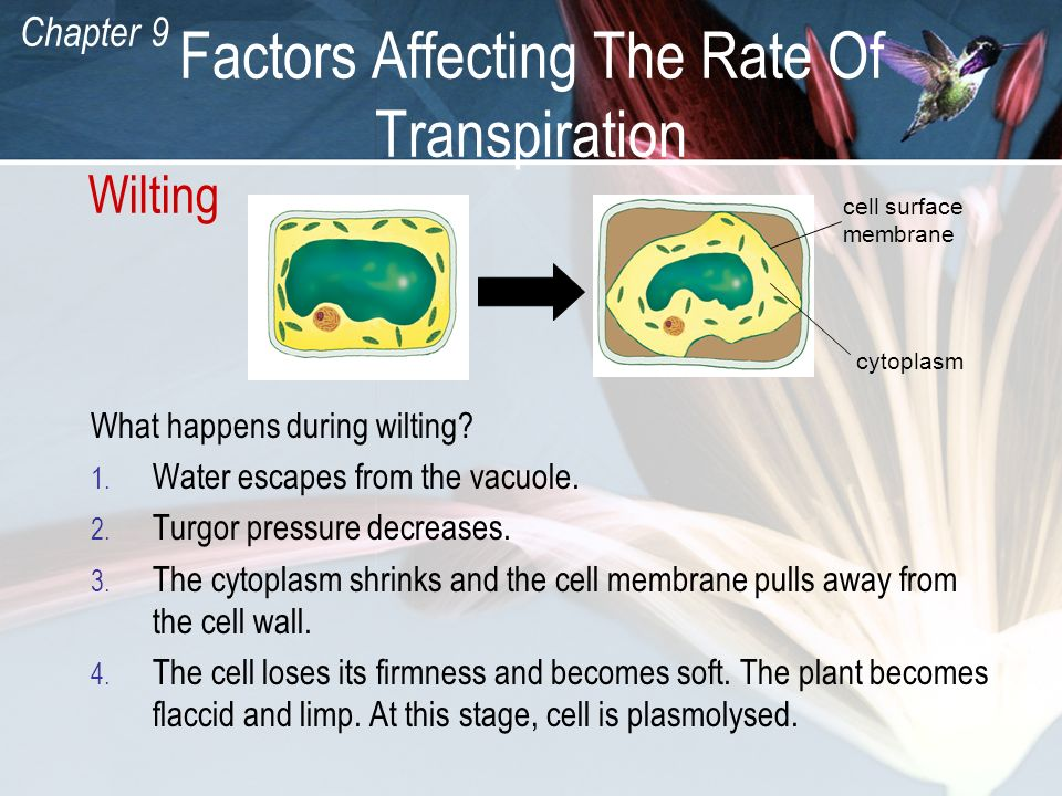 Factors Affecting The Rate Of Transpiration