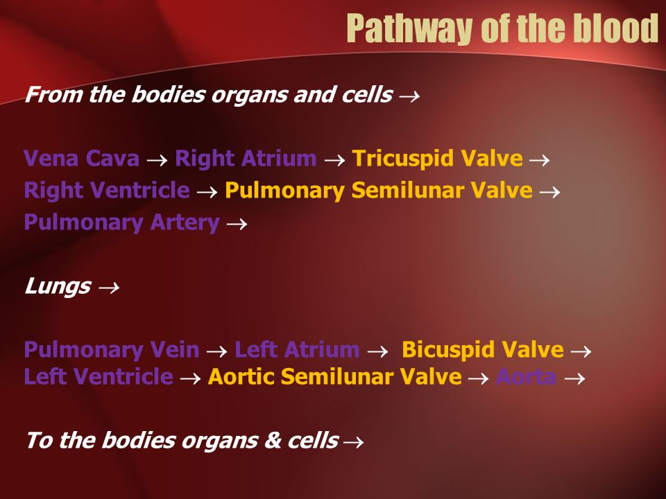 Pathway of the blood From the bodies organs and cells 
