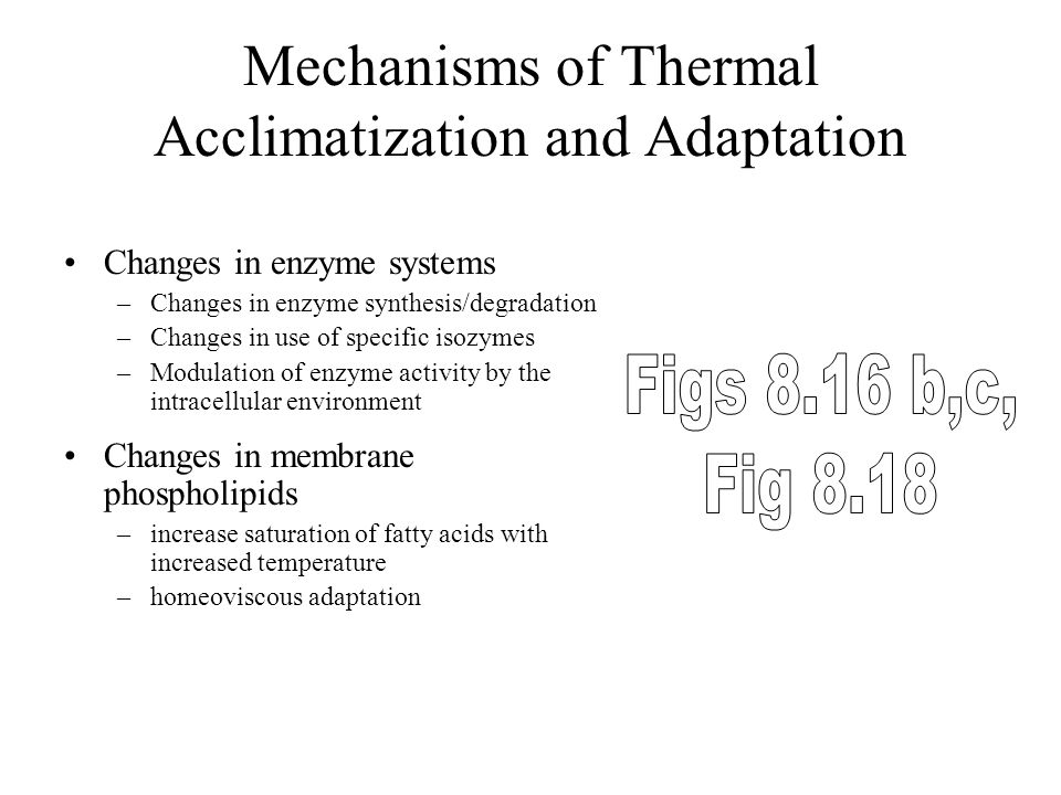 Mechanisms of Thermal Acclimatization and Adaptation