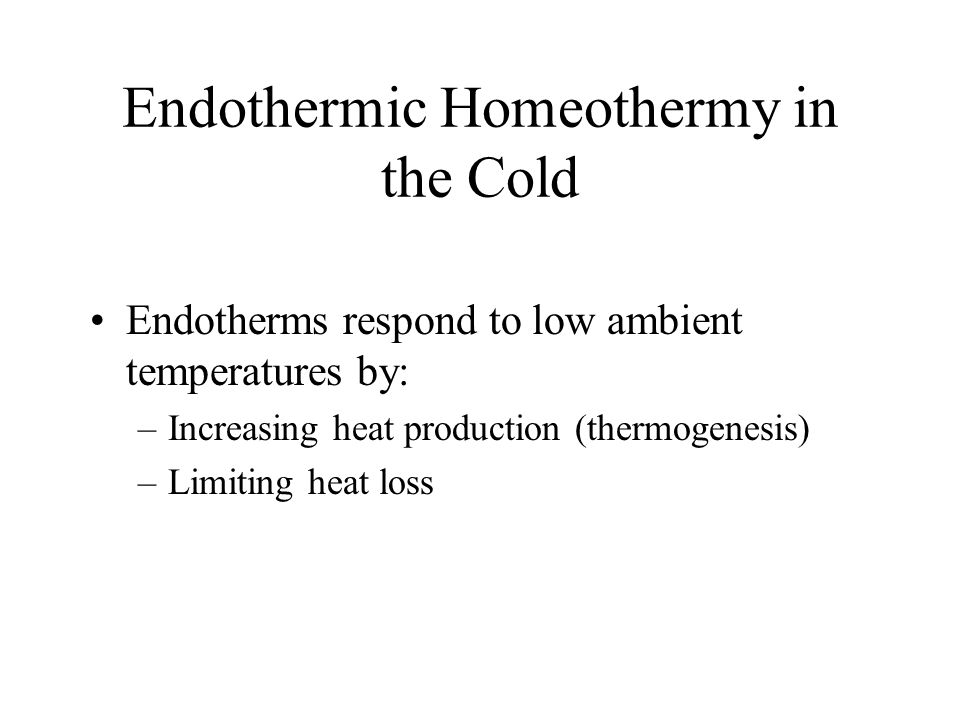 Endothermic Homeothermy in the Cold