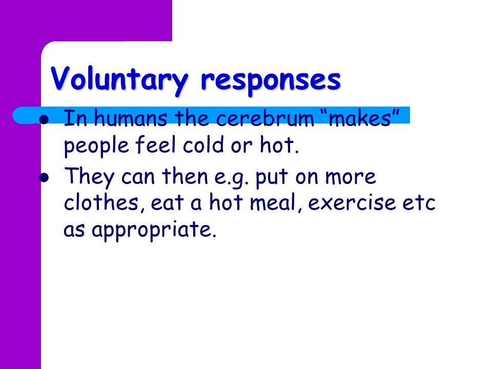 Voluntary responses In humans the cerebrum makes people feel cold or hot.