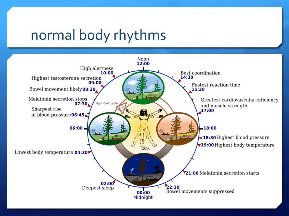 normal body rhythms