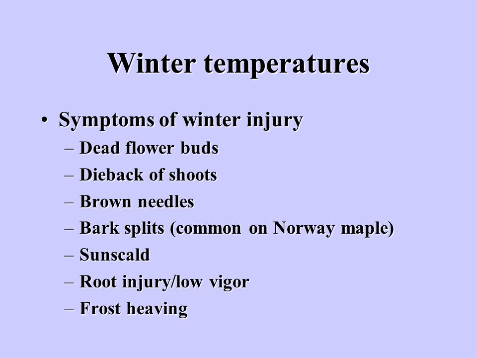 Winter temperatures Symptoms of winter injury Dead flower buds