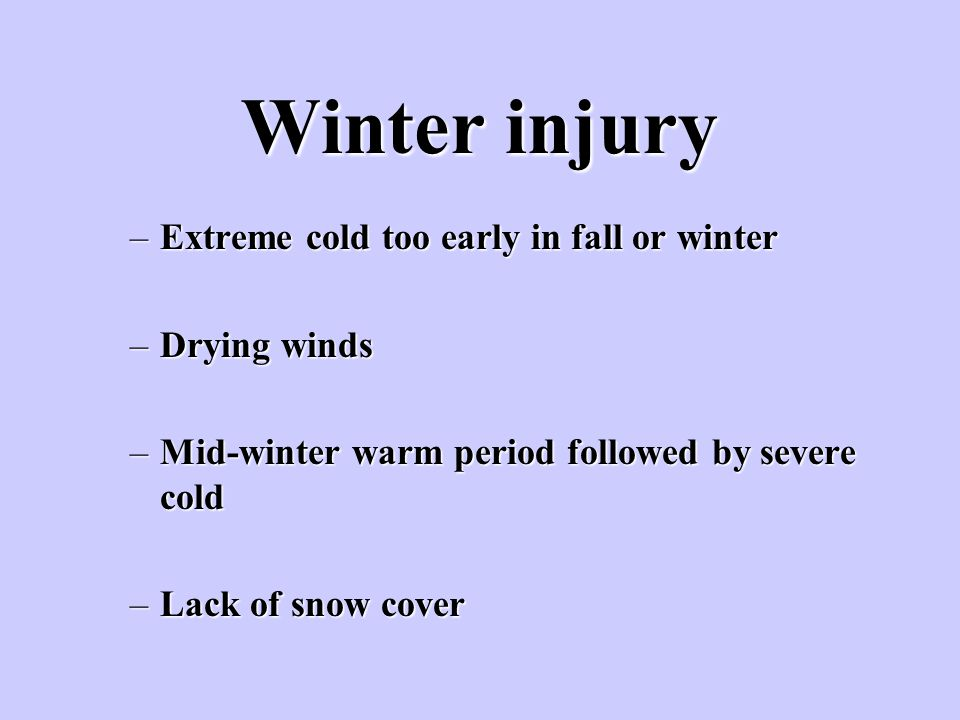 Winter injury Extreme cold too early in fall or winter Drying winds