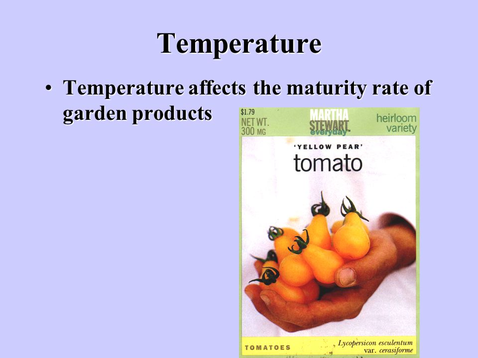 Temperature Temperature affects the maturity rate of garden products
