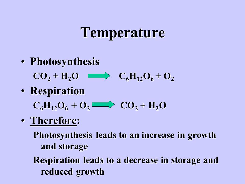 Temperature Photosynthesis Respiration Therefore: