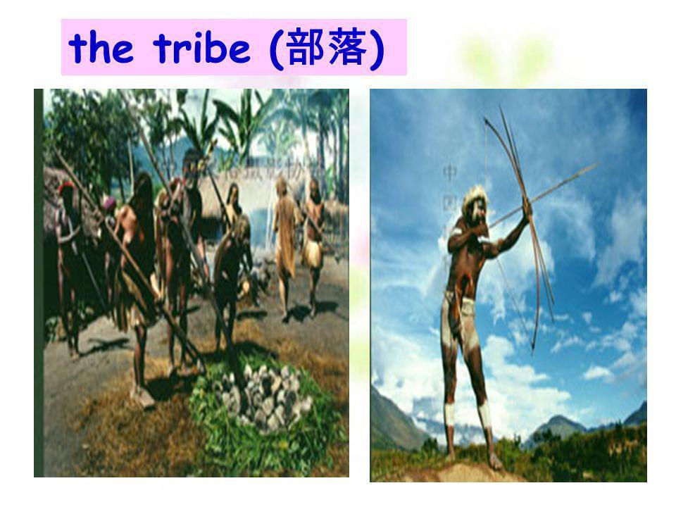 the tribe (部落)