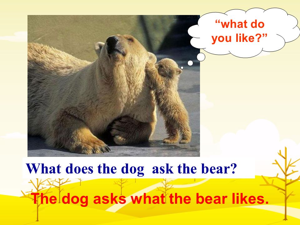What does the dog ask the bear