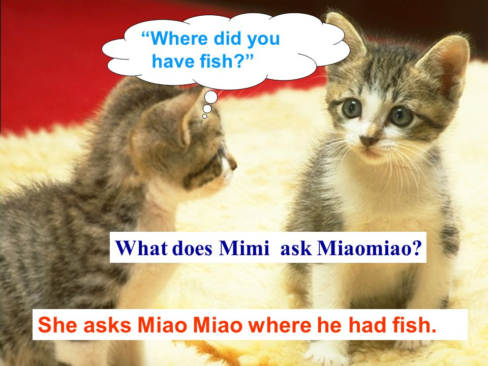What does Mimi ask Miaomiao