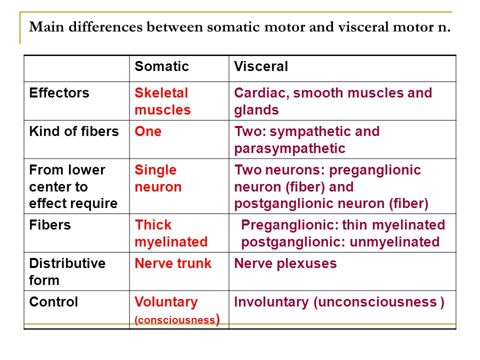 Main differences between somatic motor and visceral motor n.