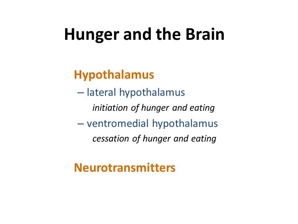 Hunger and the Brain Hypothalamus Neurotransmitters