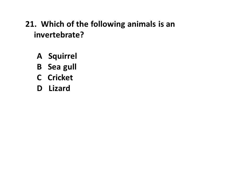 Which of the following animals is an invertebrate