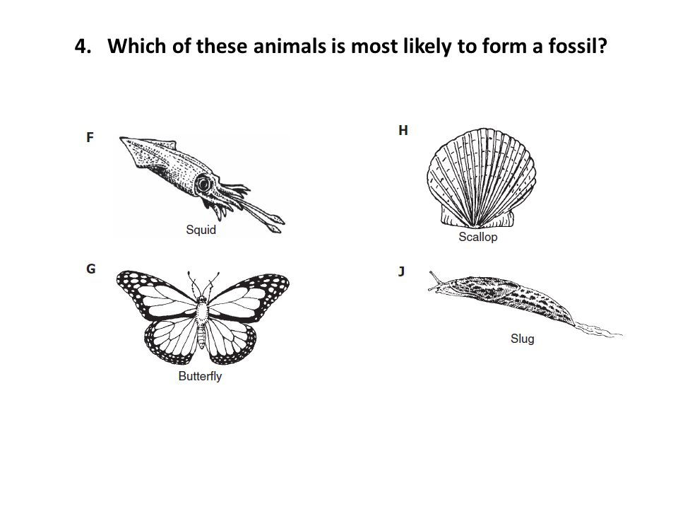 4. Which of these animals is most likely to form a fossil