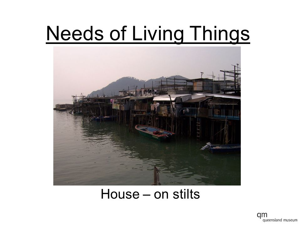 Needs of Living Things House – on stilts