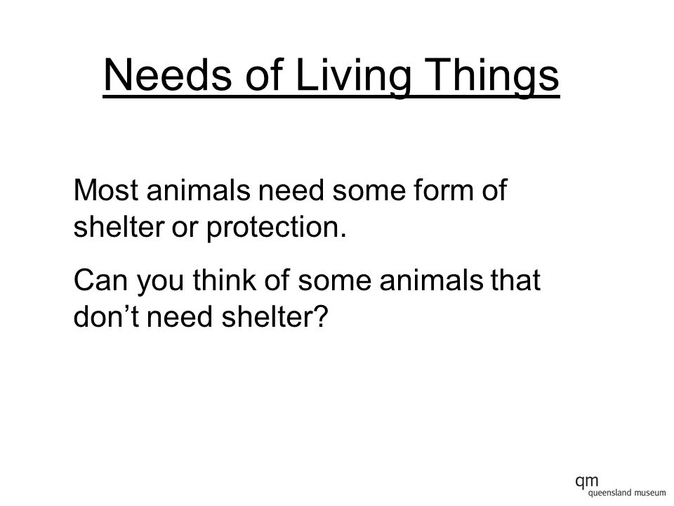 Needs of Living Things Most animals need some form of shelter or protection.