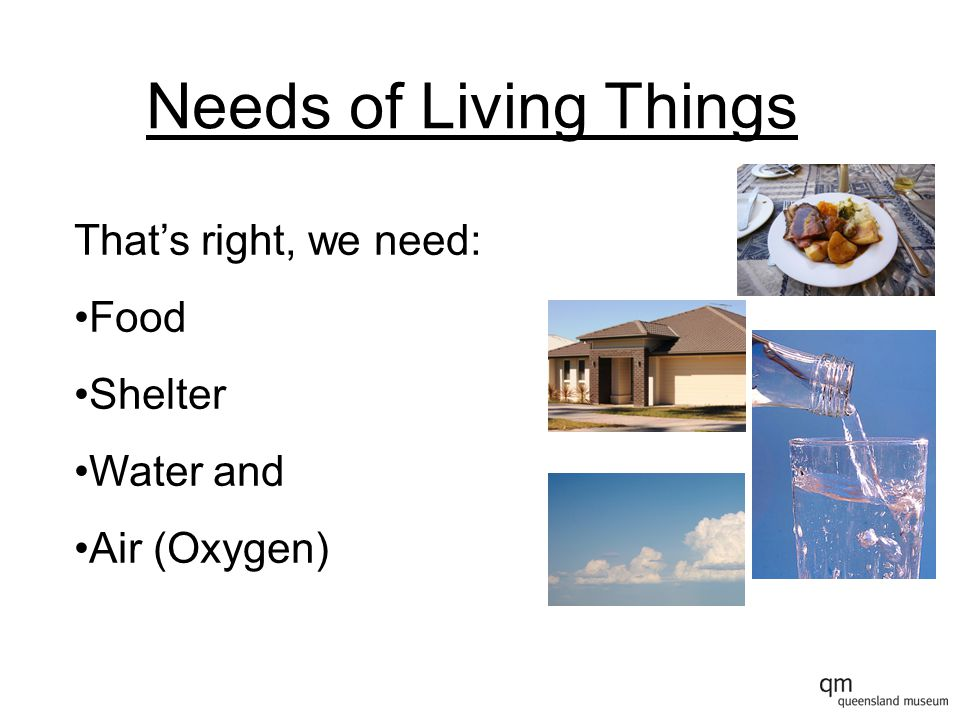 Needs of Living Things That's right, we need: Food Shelter Water and