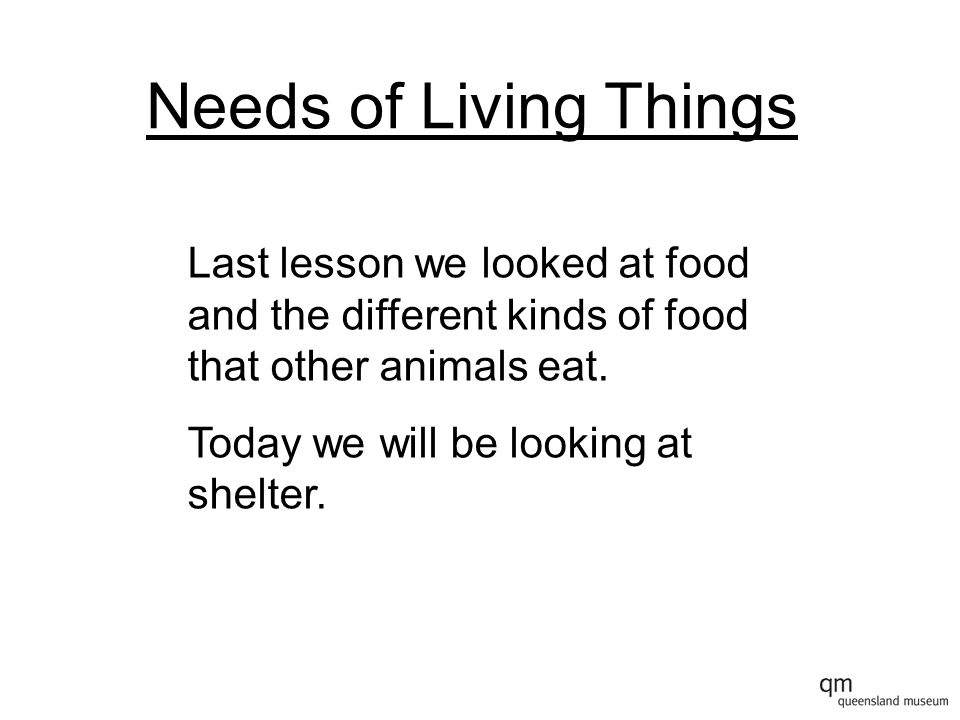 Needs of Living Things Last lesson we looked at food and the different kinds of food that other animals eat.