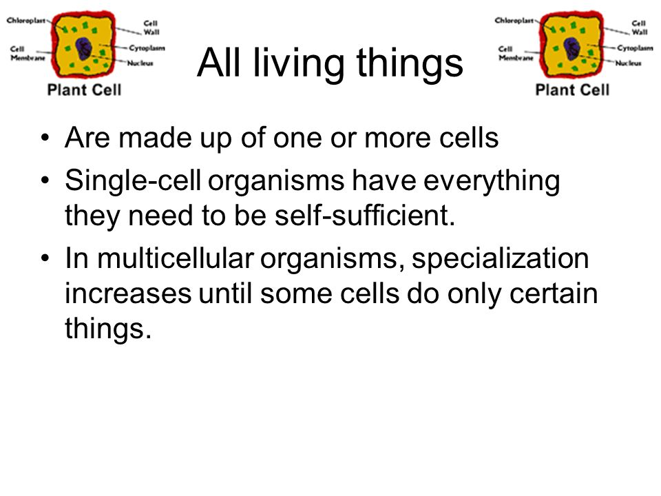 All living things Are made up of one or more cells