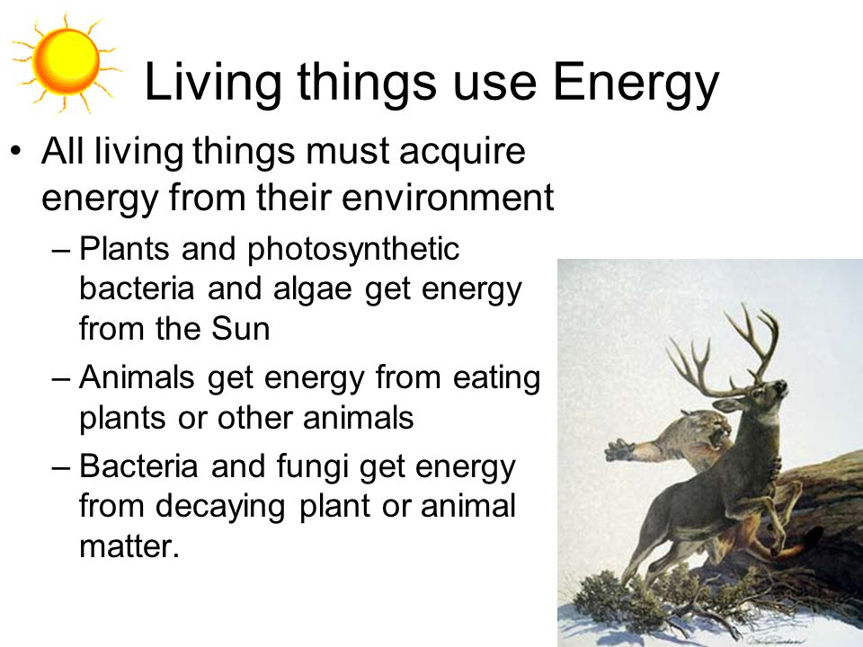 Living things use Energy