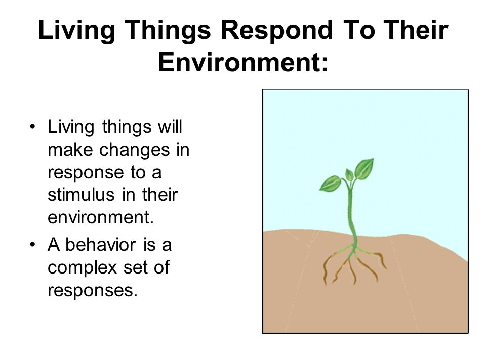 Living Things Respond To Their Environment: