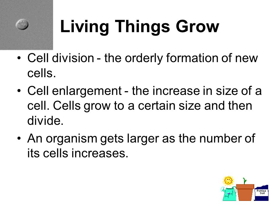 Living Things Grow Cell division - the orderly formation of new cells.