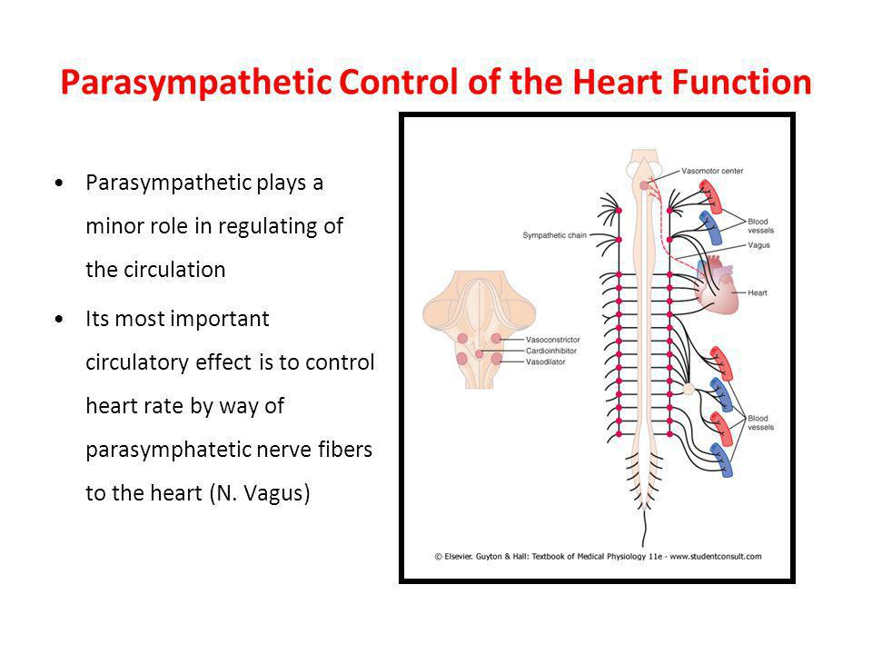 Parasympathetic Control of the Heart Function