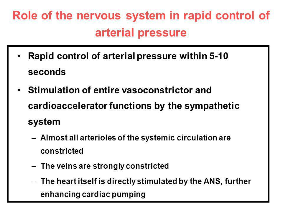 Role of the nervous system in rapid control of arterial pressure