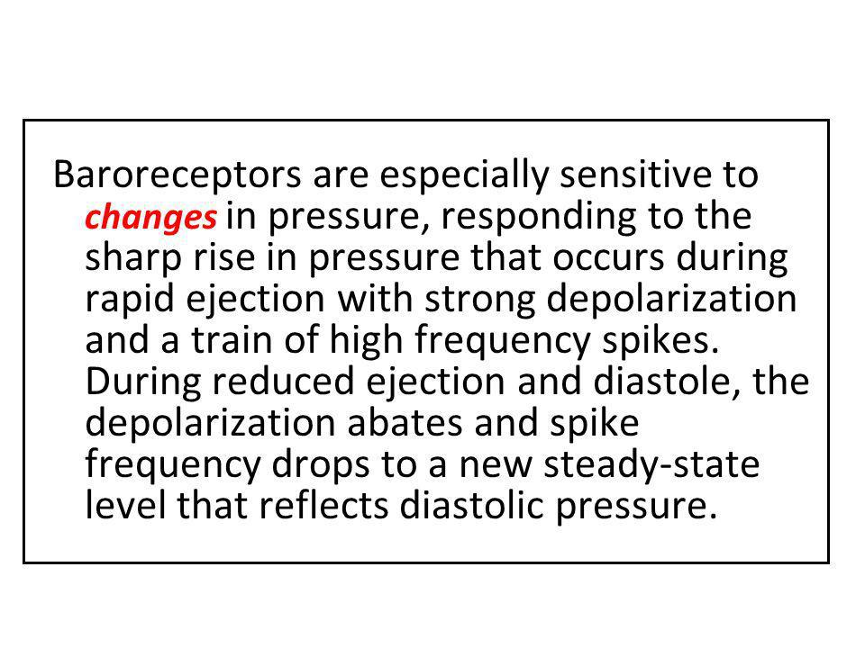 Baroreceptors are especially sensitive to changes in pressure, responding to the sharp rise in pressure that occurs during rapid ejection with strong depolarization and a train of high frequency spikes.