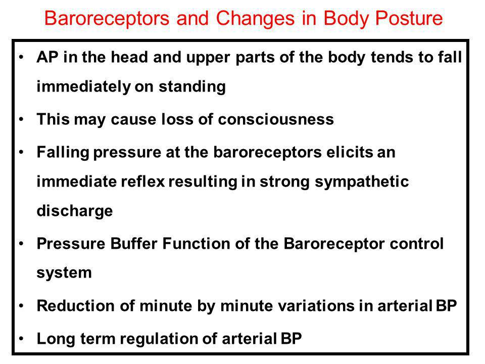 Baroreceptors and Changes in Body Posture