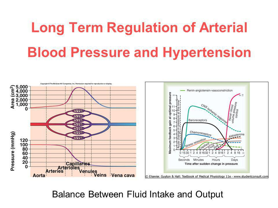 Regulation of Blood Pressure - ppt download