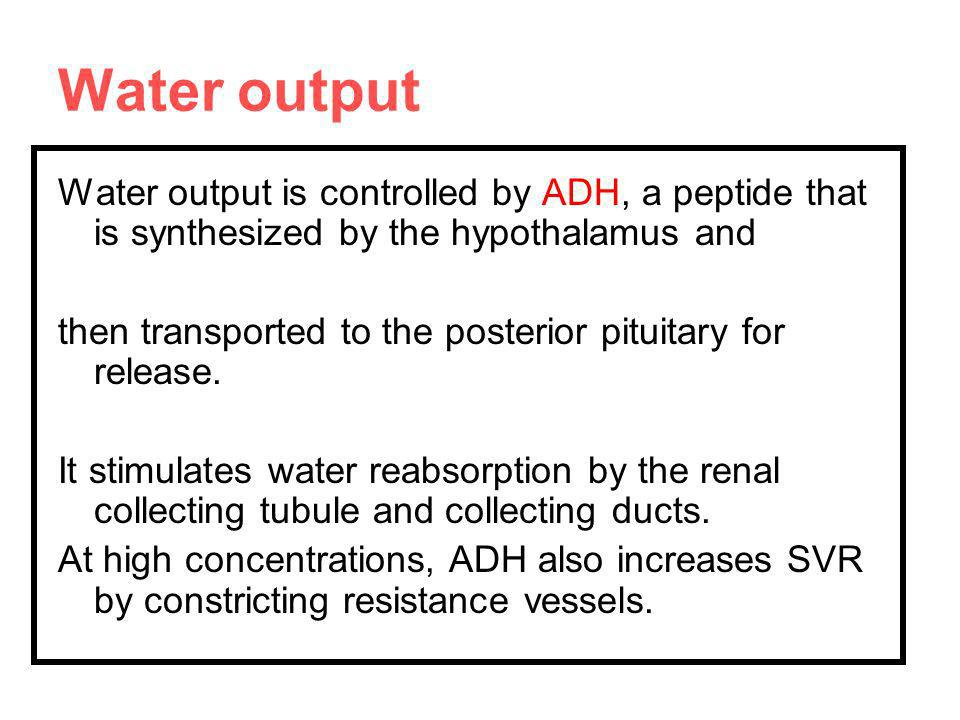 Water output Water output is controlled by ADH, a peptide that is synthesized by the hypothalamus and.