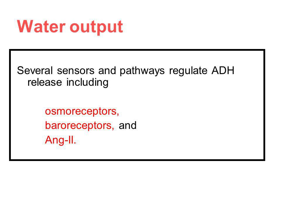 Water output Several sensors and pathways regulate ADH release including. osmoreceptors, baroreceptors, and.