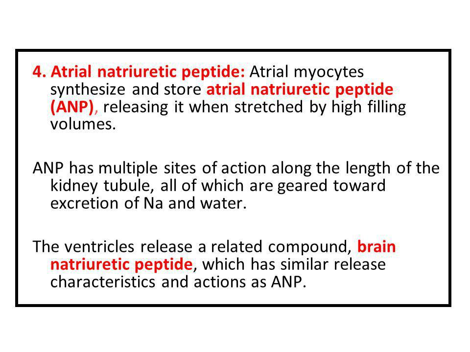 4. Atrial natriuretic peptide: Atrial myocytes synthesize and store atrial natriuretic peptide (ANP), releasing it when stretched by high filling volumes.