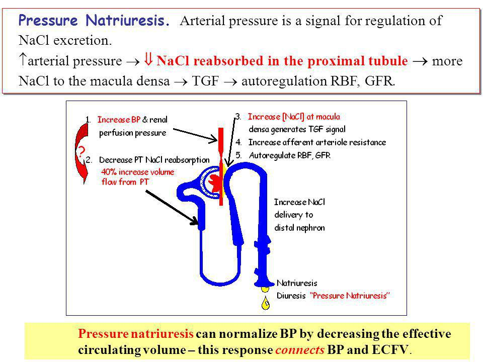 Pressure Natriuresis. Arterial pressure is a signal for regulation of NaCl excretion.