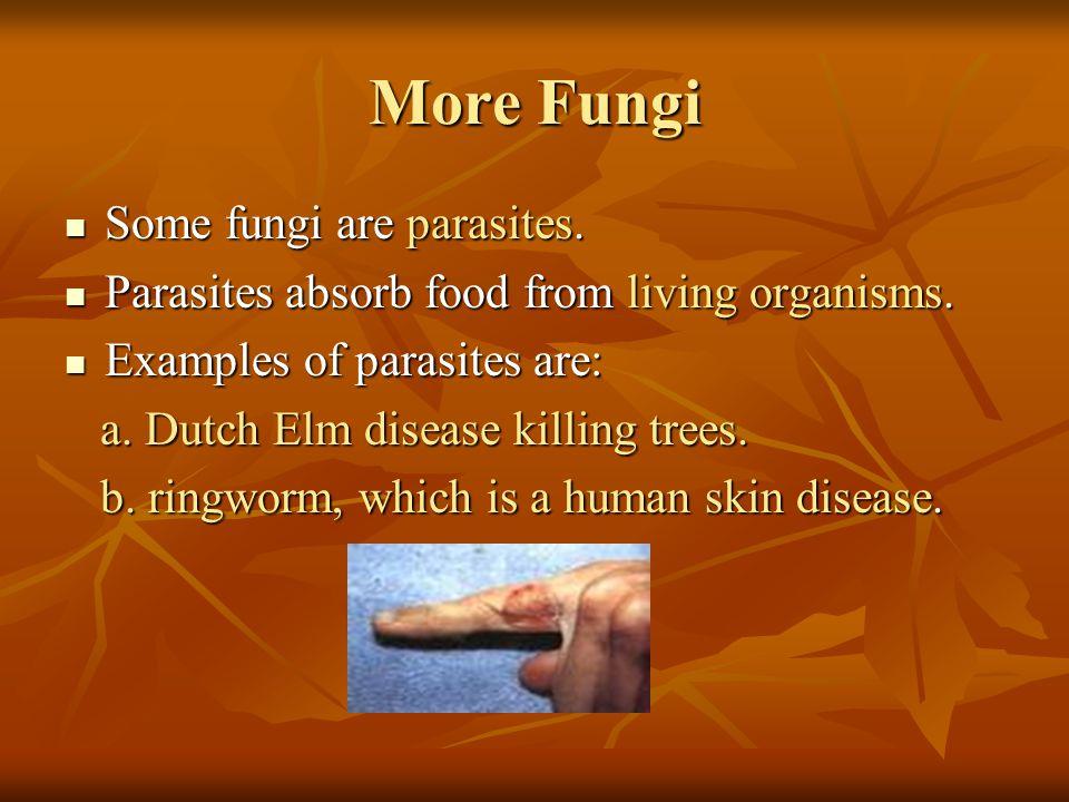 More Fungi Some fungi are parasites.