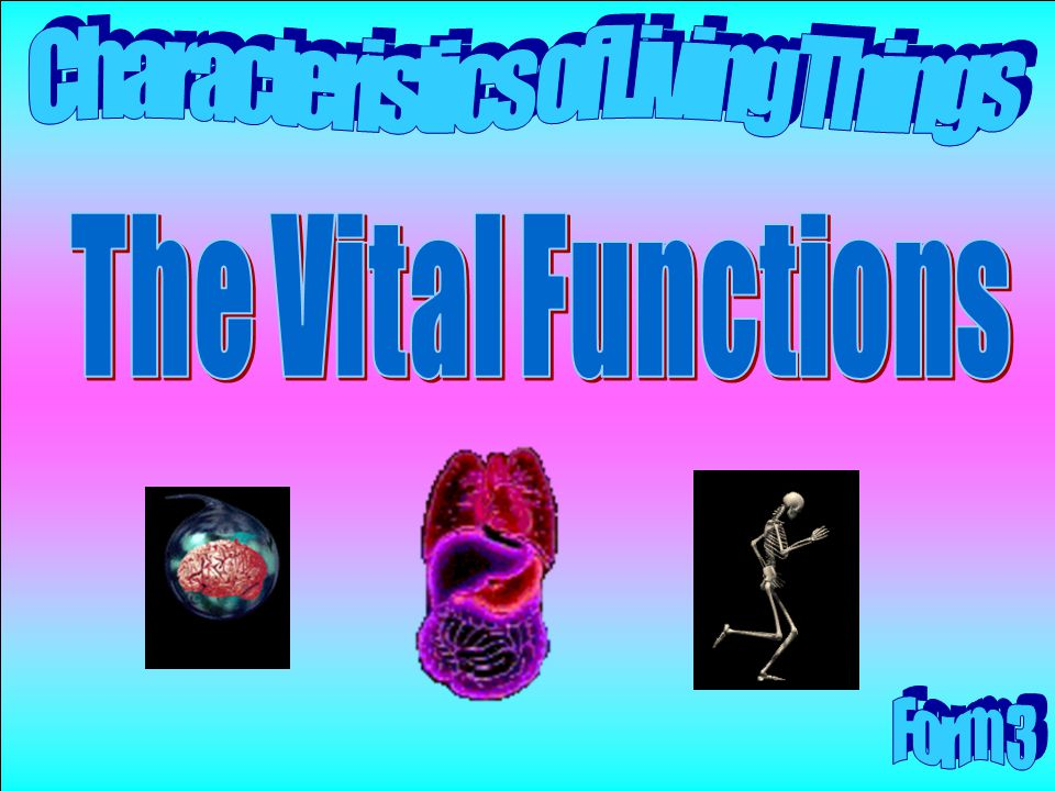 The Vital Functions