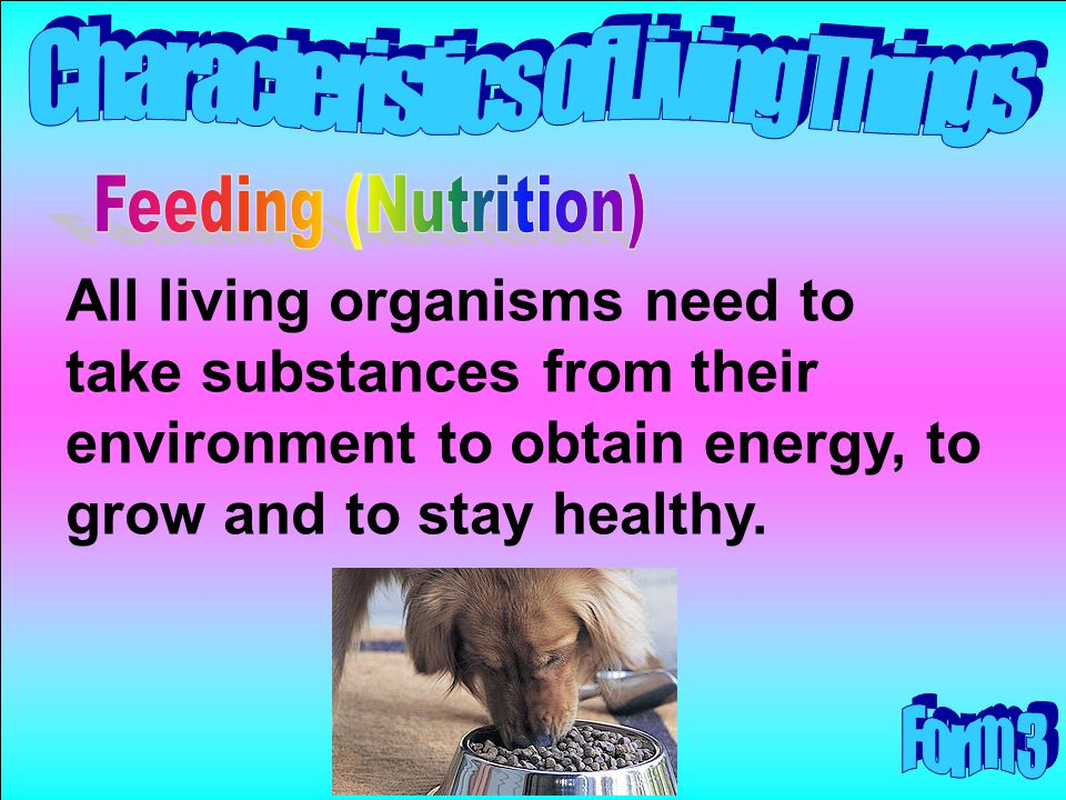 Feeding (Nutrition) All living organisms need to take substances from their environment to obtain energy, to grow and to stay healthy.