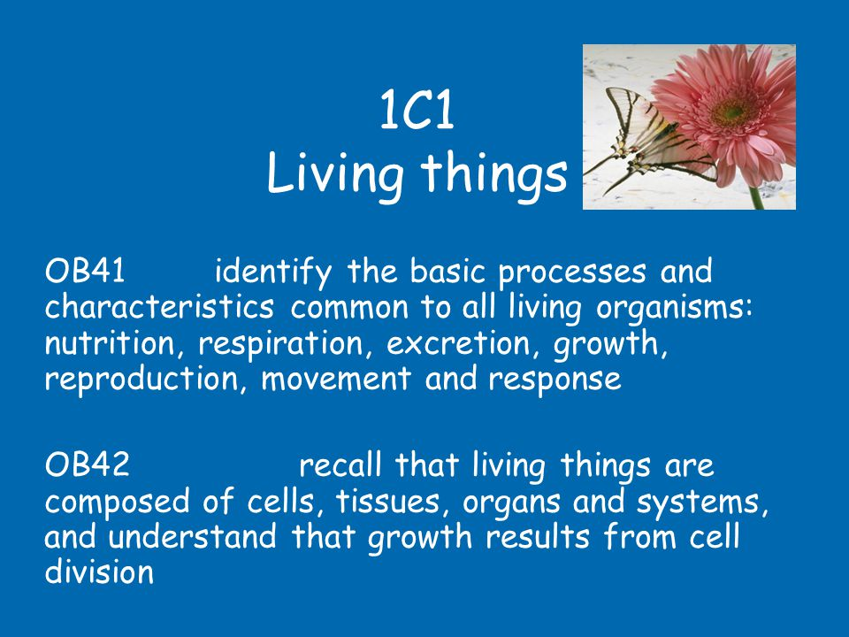 1C1 Living things