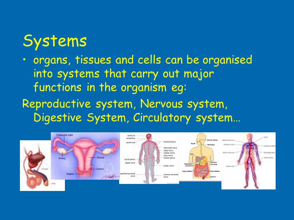 Systems organs, tissues and cells can be organised into systems that carry out major functions in the organism eg: