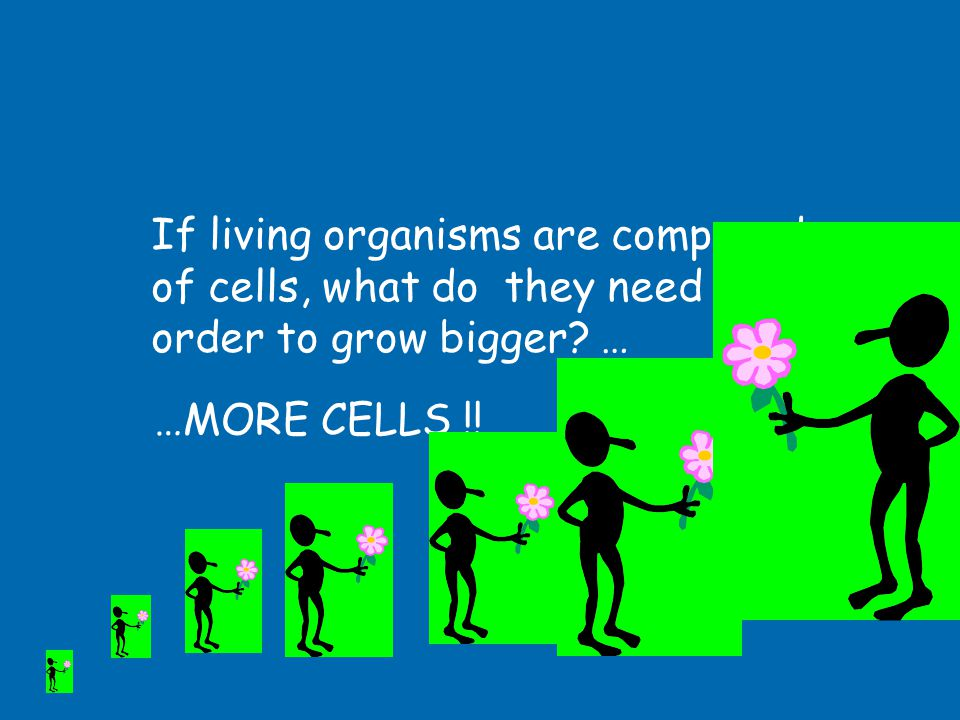 If living organisms are composed of cells, what do they need in order to grow bigger …