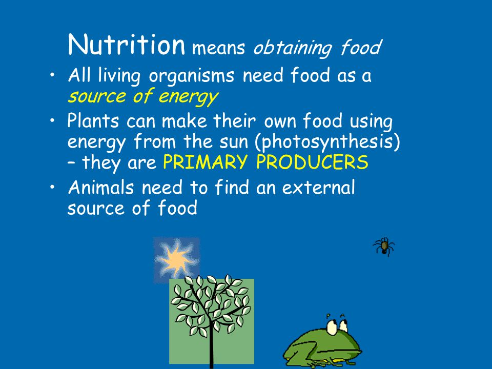 Nutrition means obtaining food