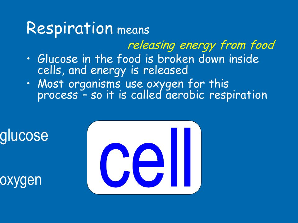 Respiration means glucose cell oxygen releasing energy from food