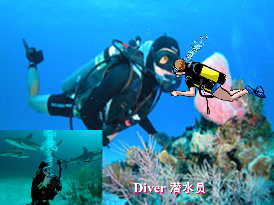 Diver 潜水员 策划:《学生双语报》