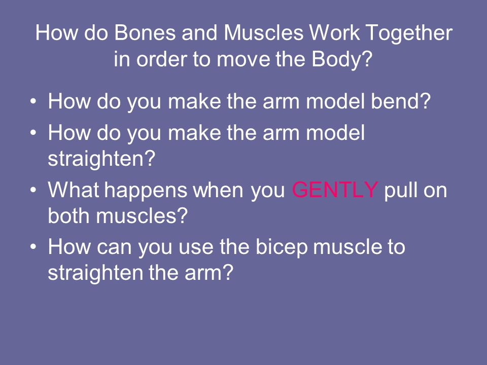 How do Bones and Muscles Work Together in order to move the Body