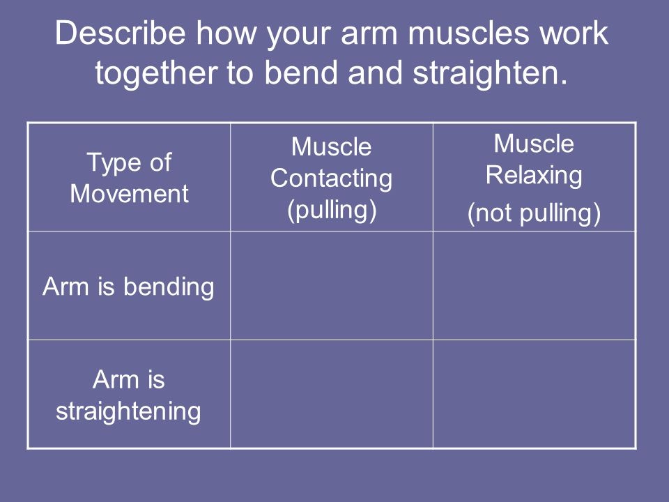 Describe how your arm muscles work together to bend and straighten.
