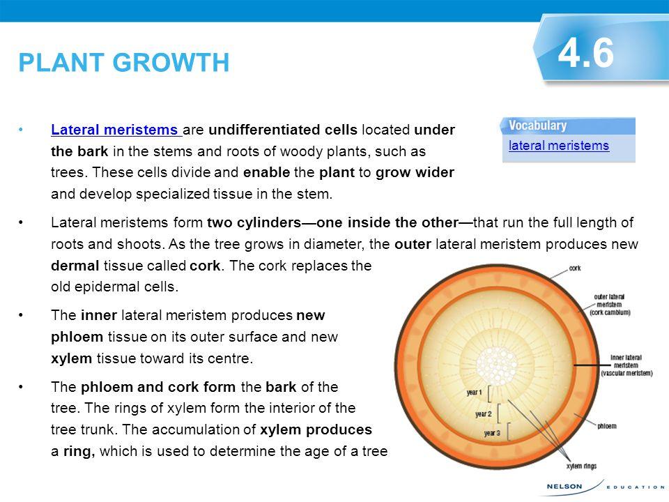 PLANT GROWTH 4.6.