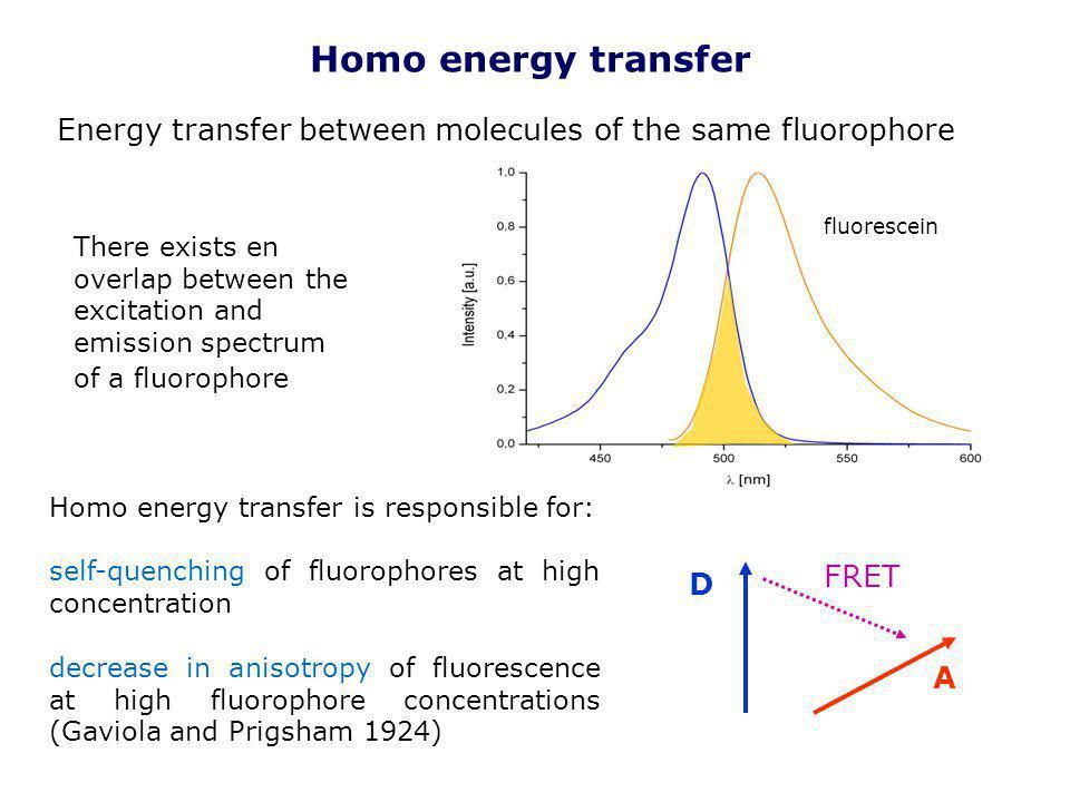Homo energy transfer Energy transfer between molecules of the same fluorophore. fluorescein.