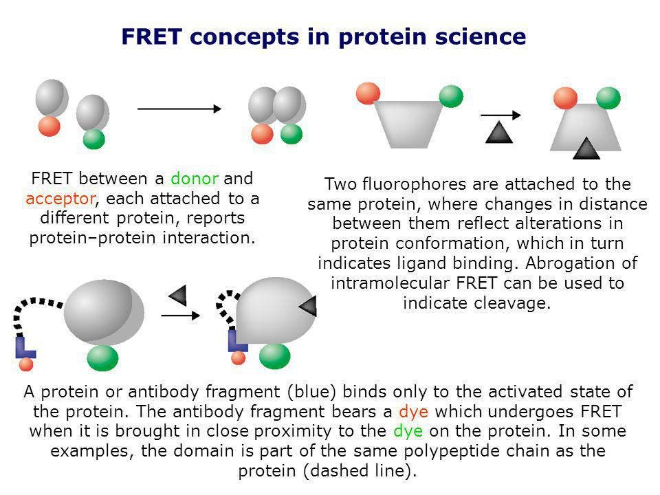 FRET concepts in protein science