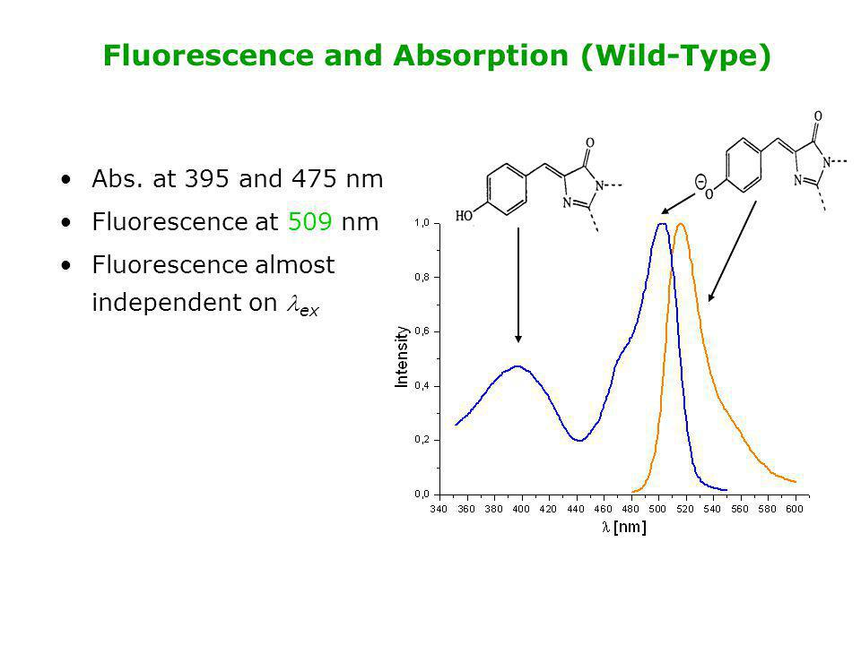 Fluorescence and Absorption (Wild-Type)