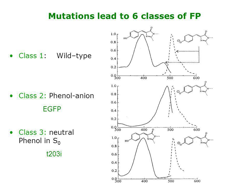 Mutations lead to 6 classes of FP
